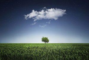 tree-736887_1280